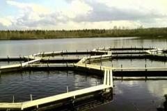 Снизить себестоимость продукции в прудовом рыбоводстве вполне реально