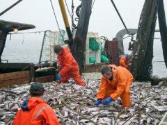 Крым может стать одним из самых прибыльных рыболовецких регионов России