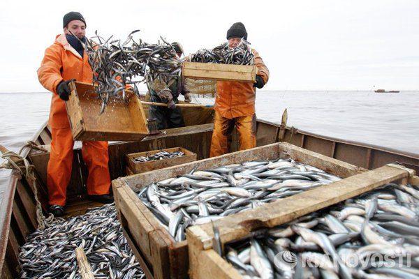 Карельским рыбоводам планируют давать льготные кредиты под залог рыбы