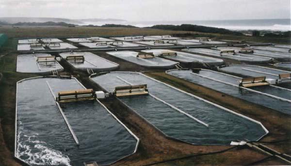 Новые предприятия и субсидии: что нужно регионам России для развития аквакультуры
