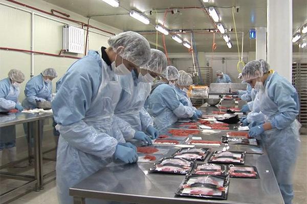 Рыбопереработку усердно обеспечивают сырьем