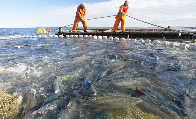 В 2017 году Правительство Севастополя выделило 36 млн рублей на поддержку рыбной отрасли