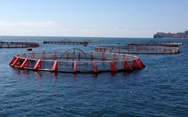 В Китае сокращаются площади хозяйств аквакультуры и марикультуры