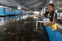 Вертикальные рыбные фермы позволят выращивать 5000 тонн рыбы в год