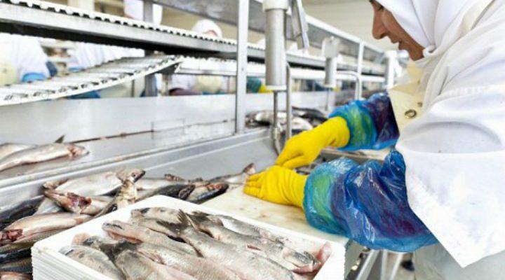 Техрегламент открывает новую страницу для производителей рыбы