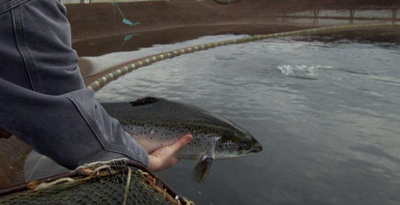 участков для пастбищной аквакультуры