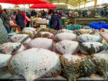 Промышленный лов камбалы-калкана черноморского закрыт до февраля 2018 года