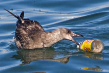 Владимир Путин: Пластик в океане – очень большая проблема