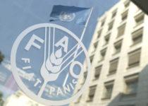 Роль аквакультуры в обеспечении продовольственной безопасности обсуждают в штаб-квартире ФАО