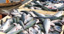 Аквафермеры Севастополя и Крыма наращивают объемы выпуска товарной продукции: итоги третьего квартала