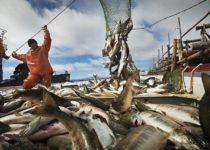 Россия завершает год с прибавкой по уловам